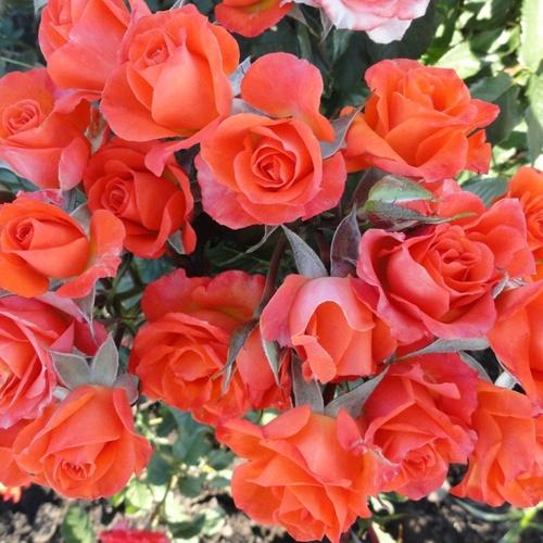 Цветы купить для посадки