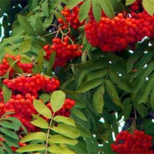 Семена оптом, производство и реализация семян овощных культур